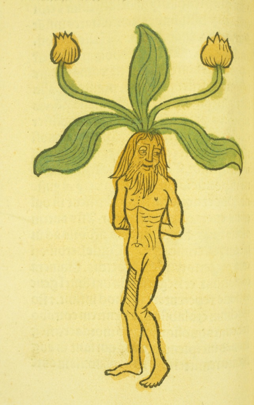 <p>Hand-colored woodcut of the plant with a naked man as its root.</p>