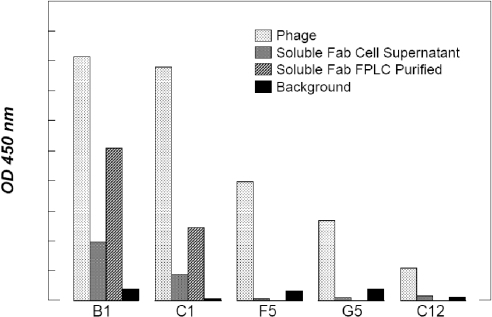Specificity of selected anti-GAPDH antibody fragments determined by ELISA. Characterization of phage and soluble Fab anti-GAPDH antibodies by ELISA. The assay was performed by immobilizing biotinylated GAPDH on a polystyrene plate. Phage-displayed antibodies reactive with the coated antigen were detected with peroxidase-conjugated anti-M13 antibody (Amersham), while the detection of soluble Fabs was performed using 9E10 anti-c-myc monoclonal antibody (final concentration 2 μg/ml) followed by peroxidase-conjugated rabbit anti-mouse antibody (1:1000). The results of the assay are shown as absorbance at 450 nm. In the case of the data obtained with the phage preparation and the sFab cell supernatant, results were not normalized for protein concentrations.