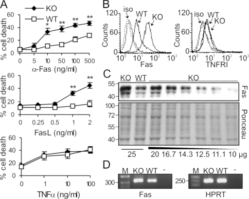 Selective hypersensitivity of Raf-1–deficient MEFs to Fas activation correlates with increased Fas expression. (A) Raf-1 KO MEFs are hypersensitive toward apoptosis induced by an agonistic Fas antibody or by FasL, but not by TNFα. MEFs were treated either with αFas, with recombinant FLAG-tagged FasL cross-linked with 1 μg/ml α-FLAG M2 antibody, or with recombinant mouse TNFα at the concentrations indicated for 22 h in the presence of 5 μg/ml Chx and 0.5% FCS. Cell death was determined by CytoTox 96 assay. The values represent the mean ± SD (error bars) of three independent cell lines. *, P < 0.02; **, P < 0.01, according to a t test comparing KO with WT cells. (B) The surface expression of Fas but not of TNFRI is altered in Raf-1 KO MEFs. WT and KO cells were stained with FITC-conjugated αFas (left) or with hamster α-mouse TNFRI antibody followed by FITC-conjugated goat α-hamster antibody (right) and were analyzed by flow cytometry. Dashed lines, isotype control (iso). (C and D) Fas is slightly overexpressed in Raf-1–deficient cells. (C) Different amounts of whole cell lysates from WT and KO cells were analyzed by αFas immunoblotting. Ponceau staining of the membrane is shown as a loading control. (D) Fas mRNA levels were determined by RT-PCR. The HPRT gene was used as a normalization control. −, negative control; M, DNA marker. Molecular mass markers (in kilodaltons, C; or bp, D) are shown on the left.