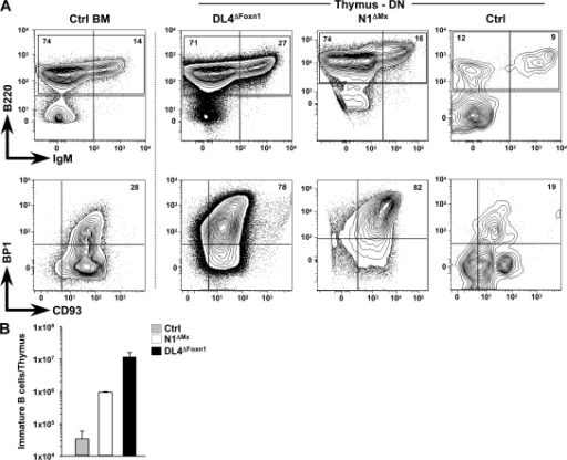 Comparative phenotypic analysis of B cells within thymi of DL4ΔFoxn1 and N1ΔMx mice. (A) Representative flow cytometric analysis of B cells in the DN thymus compartment from Ctrl, N1ΔMx, and DL4ΔFoxn1 mice stained for B220 and IgM (top) or BP1 and CD93 (bottom). B220/IgM staining is electronically gated on lineage-negative CD44+CD25− cells, whereas BP1/CD93 staining is gated on lineage-negative B220+ cells. (left) A comparative analysis of normal BM B cells to highlight the phenotypic similarity. Percentages of populations staining positively for the indicated markers are shown in the contour plots. (B) Bar graphs show the absolute numbers ± SD of immature (B220+IgM−) B cells per thymus derived from Ctrl, Notch1ΔMx, and DL4ΔFoxn1 mice (n = 6 mice per sample group). Note the logarithmic scale. All mice used were between 2–3 wk old, and data are representative of three independent experiments.
