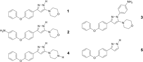 Chemical structures of compounds used in this study.The title compound 4-[5-(4-phenoxyphenyl)-2H-pyrazol-3-yl]morpholine (1) and its amino substituted derivatives 4-[4-(5-morpholine-4-yl-1H-pyrazol-3-yl)-phenoxy]phenylamine (2), 4-[5-morpholine-4-yl-3-(4-phenoxyphenyl)-pyrazol-1-yl]phenylamine (3) and 1-[5-(4-phenoxyphenyl-2H-pyrazol-3-yl]piperazine (4) are presented. 3-(4-phenoxyphenyl)-1H-pyrazole (5) showed very low antiparasitic activity (IC50 of >65 µM) as well as general toxicity (IC50 of >136 µM), therefore it was used as negative control for the biochemical, biophysical and compound sensitivity tests.