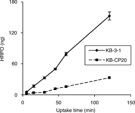 Kinetics of HRPO uptake by KB-3-1 and KB-CP20 cells. Cells were incubated with 2 mg ml−1 HRP at 37°C. After various time intervals, the cells were washed several times, lysed in PBS containing 0.2% Triton X-100, and HRP in the cell lysate was assayed. Values expressed are mean ±s.d. from three independent experiments.