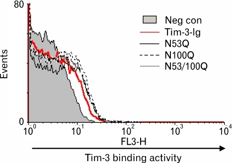 The binding activity of Tim-3-Ig N-glycosylation mutants to CD4+CD25+ T cells. Mouse CD4+ T cells were labeled with FITC conjugated anti-CD4 Ab, PE-conjugated anti-CD25 Ab and either Tim-3-Ig wild type or Tim-3-Ig N-glycosylation mutants. Subsequently, these cells were incubated with biotin-conjugated anti-human IgG Ab and Streptavidin-PerCP. Cells were gated on CD4 CD25 expression and the binding activity of Tim-3-Ig to these cells was analyzed by flow cytometry.
