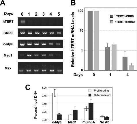 human telomerase reverse transcriptase essay