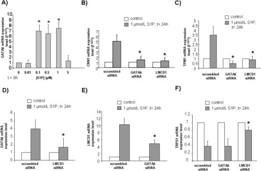 Dose-dependence of GATA6 expression level induced by S1P (A) and role of the transcription factors GATA6, LMCD1 (B,C) on the expression levels of SM markers induced by S1P in mesoangioblasts.Mutual regulation of the transcription factors GATA6, LMCD1 and TRPS1 (D,E,F). Real time PCR analysis of GATA6 (A) was performed in cells challenged with the indicated concentrations of S1P for 6 h. Real-Time PCR analysis of CNN1 (B), TPM1 (C), GATA6 (D), LMCD1 (E), TRPS1 (F) was performed in cells transfected with scrambled-, GATA6- or LMCD1-siRNA and stimulated with S1P for 24 h.