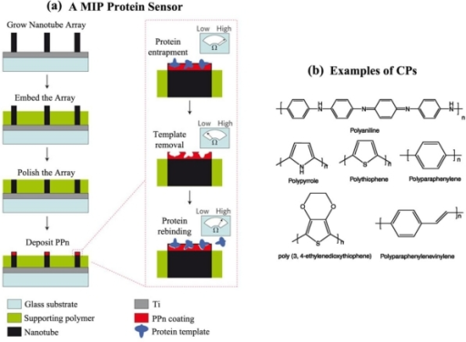 Molecular imprinting polymers (MIPs) and conducting polymers (CPs). (a) An electrochemical protein sensor employing a MIP and (b) typical examples of CPs. Adapted with permission from [80] and [81].