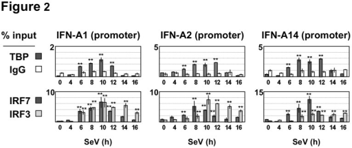 Recruitment of IRF3, IRF7 and TBP to IFN-A gene promoters.Recruitment to the IFN-A2, A14 and A1 gene promoters was determined by ChIP-QPCR assays in Namalwa B cells infected by Sendai virus. Cross-linked chromatin extracts were immunoprecipitated with antibodies specific for TBP, IRF7 or IRF3 and submitted to QPCR analysis after reversion of cross-linking, as described in Materials and Methods. Anti-rabbit IgG was used to determine background levels of non-specific binding. Data are expressed as % of the DNA input. Values are mean and standard deviation for two replicate samples derive from two representative experiments (n = 4). The error bars indicate the relative standard deviations.
