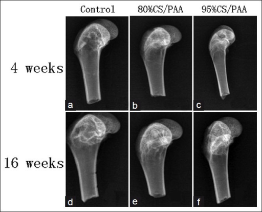 X-ray images according to the three groups and time points (a, b, c at 4 weeks and d, e, f at 16 weeks) are presented here. Demonstrate the differences in the cacellous bone defect repair of each group, with group A(80% CS/PAA) and group B(95% CS/PAA) show more vigorous and rapid repair than group C(control group)