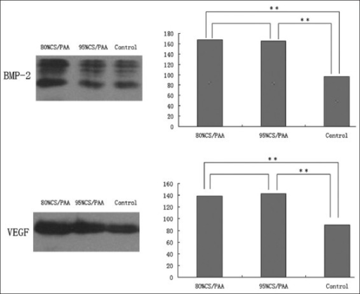 Western blot analyses of the expression of the osteogenic growth factor bone morphogenetic protein-2 (BMP-2) and angiogenic growth factor vascular endothelial growth factor (VEGF). There was a significant difference between the two implantation groups and the control group (**P<0.01)