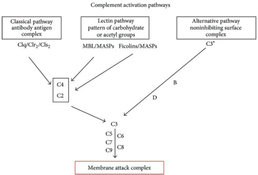complement activation attack complex