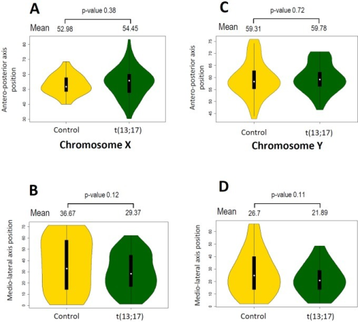 Robertsonian translocation t(13;17) does not affect SSCX and SSCY localization in the sperm nucleus.A–B. Comparison of SSCX distribution along the antero-posterior (A) and medio-lateral (B) axis in sperm nuclei from control (gold yellow) and t(13;17)(dark green) animals. Mean values for each condition are represented above the violinplot with the p-value of the corresponding t-test. C–D. Comparison of SSCY distribution along the antero-posterior (A) and medio-lateral (B) axis in sperm nuclei from control (gold yellow) and t(13;17)(dark green) animals. Mean values for each condition are represented above the violinplot with the p-value of the corresponding t-test.