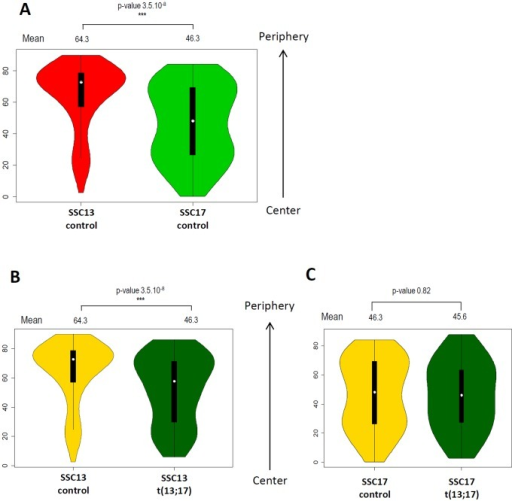 Robertsonian translocation t(13;17) affects SSC13 localization along the medio-lateral axis.A. Comparison of SSC13 and SSC17 distribution along the medio-lateral axis in control sperm nuclei. SSC13 is preferentially located at the periphery, close to the nucleus border while SSC17 is more uniformly distributed, from the periphery to the center of the nucleus. B. Comparison of SSC13 distribution along the medio-lateral axis in sperm nuclei from control (gold yellow) and t(13;17) (dark green) animals. SSC13 is displaced toward the center of the nucleus in presence of the t(13;17). Mean values for each condition are represented above the violin plot with the p-value of the corresponding t-test. C. Comparison of SSC17 distribution along the medio-lateral axis in sperm nuclei from control (gold yellow) and t(13;17) (dark green) animals. Mean values for each condition are represented above the violin plot with the p-value of the corresponding t-test.