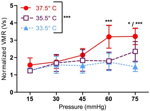 Animal's body temperature affects VMR.Following long anesthesia, animals (n = 6) were placed through three sets of graded distensions at 37.5, 33.5, and 35.5°C. Two-way ANOVA yielded a significant main effect of temperature (***p<0.0001), but not of pressure (p = 0.4536). Bonferroni's posttest revealed differences between 37.5 and 33.5°C at 60 mmHg and 75 mmHg (***p<0.001), as well as differences between 37.5 and 35.5°C at 60 mmHg (***p<0.001) and 75 mmHg (*p<0.05), and differences between 35.5 and 33.5°C at 75 mmHg (*p<0.05).