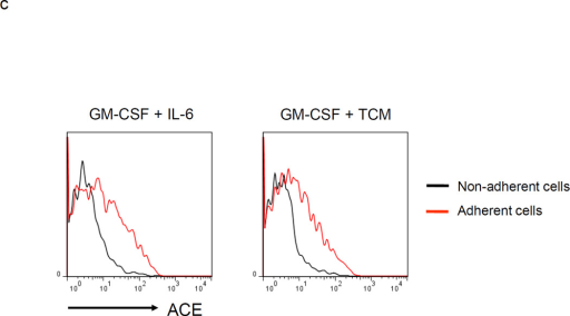 MDSC development in vitro. a. WT BM cells were cultured with GM-CSF and either IL-6 or tumor-conditioned medium (TCM) for 4 days. The non-adherent and adherent cells were then harvested and separately co-cultured with anti-CD3 and anti-CD28 stimulated CFSE-labeled T cells for another 3 days. Typical T cell proliferation profiles are shown (line) compared to the original T cells (dotted). The non-adherent cells suppress T cell proliferation resulting in less dilution of CFSE. b. The expression of surface maturation markers F4/80, CD80 and CD86 was assessed on the non-adherent and adherent cells. c. ACE expression on the non-adherent and adherent cells. d. ACE expression on the non-adherent cells with and without culture in M-CSF. e. The surface expression of Ly6G and Ly6C was measured on non-adherent cells (left). Four populations were identified: Ly6C−Ly6G+, Ly6C+Ly6G+, Ly6C+Ly6G−, and Ly6C−Ly6G−. These populations were gated and sorted, and their immunosuppressive activities were assessed by their ability to inhibit T cell proliferation (right). f. The surface maturation markers MHC class II (I-Ab) and CD86 were evaluated on the gated cells. For all the experiments, the representative flow cytometry figures presented are representative of at least 3 independent experiments.