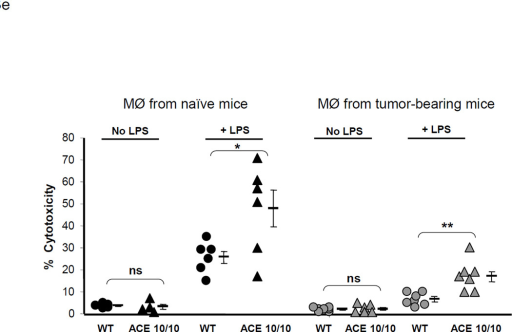 ACE over-expression disrupts the myeloid suppressing environment in cancer. a. WT and ACE 10/10 mice were challenged intradermally with melanoma cells. 14 days later, tumors were dissected and weighed. Here and in 3B, data from individual mice, as well as the group means and SEM are shown. *** P<0.001. b. WT and ACE 10/10 mice were challenged i.v. with 5 × 105 B16-F10 melanoma cells. 14 days later, metastatic nodules in the lungs were counted (top). * P<0.02. A representative photo of the lungs from a WT and ACE 10/10 mouse is shown (bottom). c. Splenocytes from naïve and tumor bearing WT, ACE 10/10, and ACE 10/10 mice treated with the ACE inhibitor captopril were stained for CD11b and Gr1 and analyzed by flow cytometry. CD11b+Gr1intermediate MDSCs are indicated in the boxed area (top). The number of MDSC from individual mice are shown (bottom), as well as the group means and SEM. * P< 0.05, ** P< 0.01. d. Mice were depleted of macrophages by i.p. injection of liposome clodronate or liposome PBS for one week before tumor challenge, and then every 72 h. A group of ACE 10/10 mice were also treated with captopril. All mice were challenged with an intradermal injection of B16-F10. Tumor volume was measured on day 14. While macrophage depletion reduces tumor size in WT mice, it results in larger tumors in ACE 10/10 mice. * P<0.05, ** P<0.01, *** P<0.001. e. Thioglycollate elicited peritoneal macrophages or tumor associated macrophages (TAM) were seeded in 96-well plates. Triplicate wells were primed overnight with 1 µg/ml LPS or left untreated, and then co-cultured with 2 × 104 tumor cells. 18 h later, tumor cell death was evaluated by measuring LDH release into the supernatant. *P< 0.05, ** P<0.02, ns = not significant.