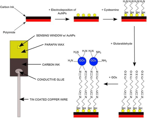 Schematic diagram showing the functionalisation scheme. The scheme shows the major steps in the functionalisation scheme for AuNPs on carbon electrode. Starting with the printed carbon electrode AuNPs are printed and functionalized with cysteamine, glutaraldehyde and glucose oxidase, also included is a schematic of a fully prepared electrode for biosensing (left).