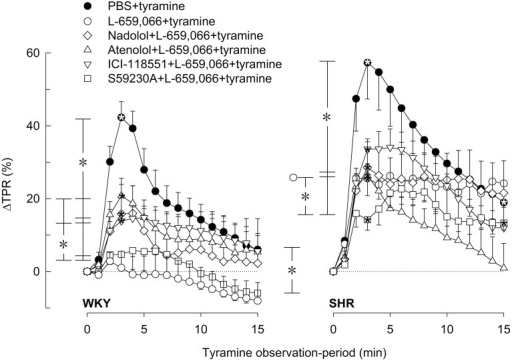 The effect of βAR antagonists on the α2AR-influence on the TPR-response to tyramine-induced norepinephrine release in WKY and SHR. The rats were pre-treated with the peripherally restricted α2AR antagonist L-659,066, alone or combined with βAR antagonist, as indicated by symbol legends. Significant responses (* within symbol) and differences between groups at peak-response (brackets left of curves) and at 15 min (brackets right of curves) were located as indicated. Comparisons were made between the control and the experimental groups, and between corresponding L-659,066 and βAR antagonist + L-659,066 groups. Baselines prior to tyramine are shown in Table 1. P ≤ 0.025 after curve evaluation (please see Materials and Methods for details).