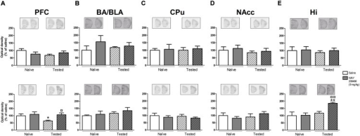 Effects of saline and WAY208466 (9 mg/kg, ip) on the levels of Arc (activity-regulated cytoskeleton-associated protein) mRNA after PA test for STM (upper) or LTM (lower) for (A) PFC, pre frontal cortex; (B) BA/BLA, lateral and basolateral amygdala; (C) CPu, caudate putamen; (D) NAcc, nucleus accumbens; (E) Hi, hippocampus.∗p < 0.05; ∗∗p < 0.01 compared to saline naïve group. ¤¤p < 0.01 compared to saline group. Mean ± SEM; n = 6–8 mice per group.