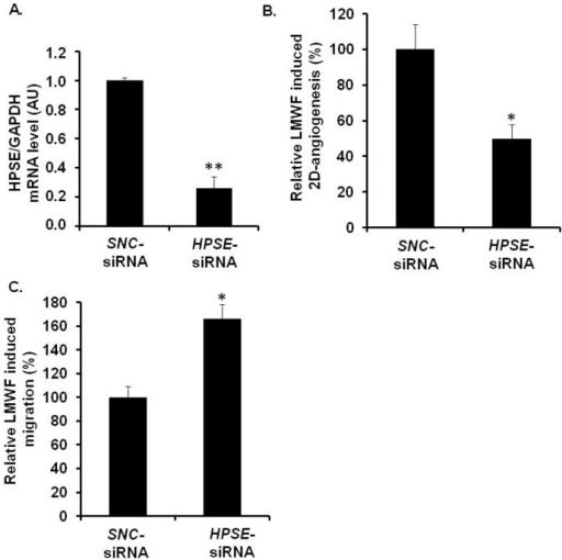Assessment of HPSE involvement in biological effects of LMWF in HUVECs. HUVECs were transfected with HPSE-siRNA or SNC-siRNA control. (A) HPSE mRNA levels were determined in HPSE-siRNA- or SNC-siRNA-transfected cells by real-time RT-PCR. HPSE mRNA level normalized to GAPDH mRNA level in SNC-siRNA-transfected control cells was arbitrary set to 1; (B) 2D-angiogenesis was assayed in cells treated with or without 10 µg/mL LMWF. The difference in the capillary network length between LMWF-treated and untreated cells in HPSE RNA interference condition was compared to that in SNC-siRNA-transfected cells; (C) Migration was assayed in cells treated with or without 10 µg/mL LMWF. Control LMWF induction was arbitrary set at 100% for SNC-siRNA-transfected cells. * p < 0.05, ** p < 0.005 versus SNC-siRNA-transfected control cells. A.U.: arbitrary unit.