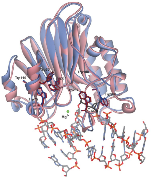 Overall structures of free APE1 (pink, PDB ID 4LND) and APE1 associated withdamaged DNA (violet, PDB ID 1DE8).
