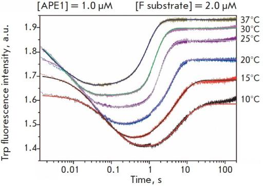 Changes in the Trp fluorescence intensity during interaction between APE1 andthe F substrate at different temperatures. [APE1] = 1.0 μM, [F substrate]= 2.0 μM.