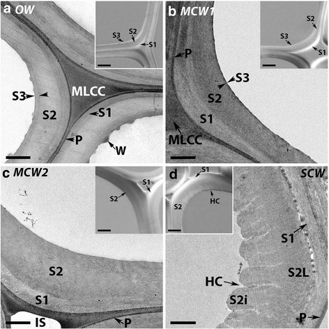 Micrographs of transverse sections of OW and three CWs showing tracheid wall structures. The main panels show transmission electron micrographs of OW (a), MCM1 (b), MCW2 (c) and SCW (d). In all wood types, the middle lamella is clearly differentiated from the primary wall (P) around the cells and at the cell corners (MLCC). All tracheid walls have a S1 and S2 layer, but an S3 layer is present in only OW (a) and MCW1 (b). Warts (W) are observed on the tracheid wall surface adjacent to the cell lumen in only OW (a). Helical cavities (HC) are present in the inner region of the S2 layer (S2i) in only SCW. Intercellular spaces (IS) are present between tracheids in only MCW 2 (c) and SCW (d). Micrographs obtained using a Leica confocal microscope. Scale bar: 1 μm. The insets show differential interference contrast micrographs. These particularly show the S1 and S3 layers in OW (a) and MCW1 (b) and helical cavities in SCW (d). All sections were from Tree 1. Scale bar: 5 μm