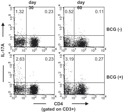 BCG vaccination did not induce Th17 cells in the lungs after M. tuberculosis challenge. Wild‐type C57BL/6 mice were vaccinated with M. bovis BCG 30 or 60 days before M. tuberculosis H37Rv infection. The PIF cells (5 × 105 cells) were prepared on the 4th week after the M. tuberculosis infection, and were cultured with PPD (5 μg/ml) in the presence of naive spleen antigen presenting cells (1 × 105 cells) for 18 h at 37°C, and with GolgiPlug for the last 6 h. After the culture, the cells were surface stained with FITC‐CD3 and APC‐conjugated anti‐CD4. Surface‐stained cells were subjected to intercellular cytokine staining with a PE‐conjugated anti‐IL‐17A mAb. The samples were analyzed by FCM.