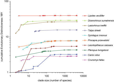 Scaling of ED scores with clade size for ten Critically Endangered mammal species. ED scores were calculated at each node between the tips and root for ten species in different orders. Species chosen are: the baiji (Lipotes vexillifer), sumatran rhino (Dicerorhinus sumatrensis), northern hairy-nosed wombat (Lasiorhinus krefftii), persian mole (Talpa streeti), Omiltemi rabbit (Sylvilagus insonus), Przewalski's gazelle (Procapra przewalskii), black-faced lion tamarin (Leontopithecus caissara), Livingstone's flying fox (Pteropus livingstonii), red wolf (Canis rufus) and northern Luzon shrew rat (Crunomys fallax). See Materials and Methods for further details.