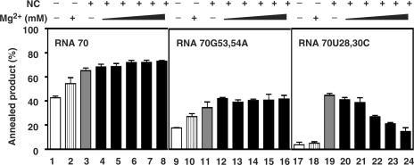 Effect of Mg2+ on annealing of RNA 70 and RNA 70 mutants to DNA 50. 32P-labeled DNA 50 was incubated with RNA 70 (lanes 1–8), RNA 70G53,54A (lanes 9–16) or RNA 70U28,30C (lanes 17–24) for 30 min at 37°C under conditions indicated below. Bar graphs show the percentage (%) of DNA 50 annealed for each reaction. Symbols: open bars, no NC and no Mg2+ (lanes 1, 9, 17); striped bars, 7 mM Mg2+ alone (lanes 2, 10, 18); gray bars, 0.88 nt/NC (1.4 µM) and no Mg2+ (lanes 3, 11, 19); black bars, 0.88 nt/NC and increasing concentrations of Mg2+as follows: 0.25 mM Mg2+ (lanes 4, 12, 20); 0.5 mM Mg2+ (lanes 5, 13, 21); 1.75 mM Mg2+ (lanes 6, 14, 22); 3.5 mM Mg2+ (lanes 7, 15, 23); 7 mM Mg2+ (lanes 8, 16, 24). Note that the order of addition of NC and MgCl2 had no effect on the extent of annealing (data not shown).