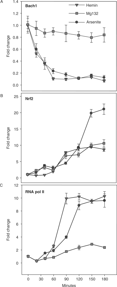 Association of NRF2 and BACH1 DNA binding with transcriptional activation. Time course of DNA binding by BACH1 (A) NRF2 (B) and RNA polymerase II (C) following treatment with 25 μM arsenite, 5 μM MG132 or 25 μM hemin. ChIP-enriched DNA was quantified using qRT–PCR with primers flanking the HMOX1 ARE motifs at positions −3992 (NRF2 and BACH1) and −148 (RNA Pol II) and is expressed as the value for each treatment normalized to its corresponding input and expressed as fold enrichment relative to untreated control. Figures represent the results of two independent experiments performed in triplicate ± SEM.