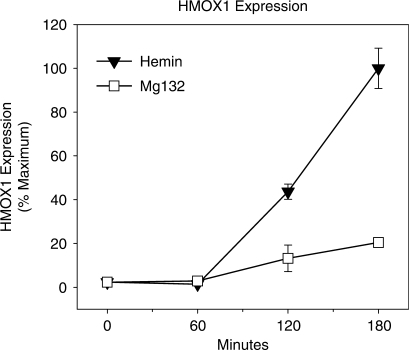 Time course of HMOX1 expression elicited by hemin and MG132 treatment. The time course of HMOX1 mRNA expression following treatment with 25 μM hemin or 5 μM MG132. HMOX1 mRNA was determined by quantitative real-time PCR (qRT–PCR), normalized to β-actin mRNA and expressed as percent maximum expression. Values represent at least three independent experiments quantified in triplicate ± SEM.