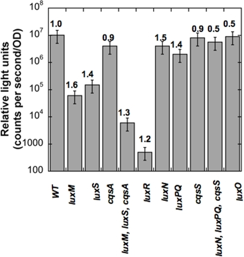 The peak bioluminescence of autoinducer synthase and sensor mutants.Bars represent Relative Light Units (RLU = counts per second/OD) and growth rates (doublings/H; from table 2) are given above each bar. The wild type strains, BB120 and BB866 (WT::Tn5) gave similar RLU values. Wild type RLU values refer to strain BB866 in this figure. Mutant strains: BB152 (luxM), MM30 (luxS), JMH603 (cqsA), JMH634 (luxM, luxS, cqsA), KM664 (luxR), BB170 (luxN), BB886 (luxPQ), JMH598 (cqsS), JMH628 (luxN, luxPQ, cqsS) and BB721 (luxO).