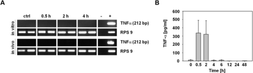 TNF-α release into the blood of S. Typhimurium-infected, CT26 tumor-bearing mice.(a) RT-PCRs were performed with RNA isolated from S. Typhimurium-infected CT26 cells (in vitro) and from CT26 tumors of S. Typhimurium-infected, tumor-bearing BALB/c mice (in vivo) at the indicated time points. The amplification product has a size of 212 bp. (b) TNF-α concentration in the blood of CT26 tumor-bearing BALB/c mice at different times p.i. determined using TNF sensitive L929 fibroblasts. Error bars show standard deviations of means. Results are representative for at least two independent experiments with 3–5 mice per group.