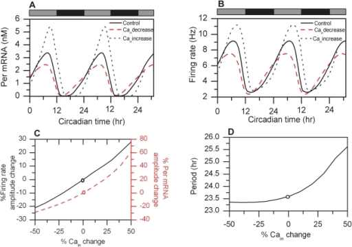 Cytosolic calcium levels regulate circadian behavior.Circadian profiles of Per mRNA (A) and firing rate (B) are shown for the control (black line), 50% reduced cytosolic Ca2+ concentration (red dashed line) and 50% increased cytosolic Ca2+ concentration (blue dotted line) compared to the control. C). Per mRNA (red dashed line) and firing rate (black solid line) amplitudes as a function of the cytosolic calcium concentration. D). The period of the core oscillator as a function of the cytosolic calcium concentration. The circles in 6C and 6D represent nominal values of the model.