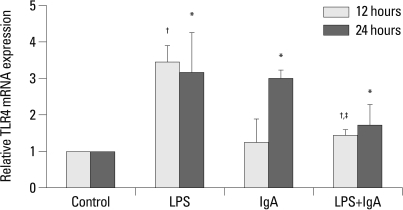 TLR4 mRNA level was upregulated by LPS at 12 hours and 24 hours, and by IgA at 24 hours. Combined LPS and IgA stimulation did not increase the TLR4 mRNA level. *p<0.05 vs. 24 hours control, †p<0.05 vs. 12 hours control, ‡p<0.05 vs. 12 hours LPS. TLR4, Toll-like receptor 4; mRNA, messenger ribonucleic acid; LPS, lipopolysaccharide.