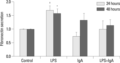 Fibronectin secretion in culture media increased at 24 hours and 48 hours in LPS-treated MMC, but did not increase after treatment with IgA alone or combined LPS and IgA. *p<0.05 vs. 24 hours control, †p<0.05 vs. 48 hours control. LPS, lipopolysaccharide; MMC, mouse mesangial cells.