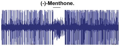 "Inhibitory effect of (–)Menthone on the AalOR2-""empty-neuron"".Representative trace of Single-Sensillum Recordings from AalOR2-ORCo in the ab3A ORN, in response to 10−3 M (–)-Menthone. The firing rates clearly indicate a decrease in the number of large spikes corresponding to the ab3A neuron in one second of activity. Like with the other odors, the experiments were carried out testing three independent UAST insertions and identical results were observed in all the lines. Three sensilla were analyzed per fly, for a total of three flies per each transgenic strain."