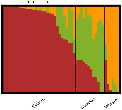 Structure plot of the assignment probabilities in the African panel.Each accession is represented by a bar and the highest Q group membership defines cluster assignment. Asterisks mark the three modern varieties included (from left to right: Staha; TMV1, Longe 5). The plot is based on 26,900 SNPs and the highest probability run for K = 3.