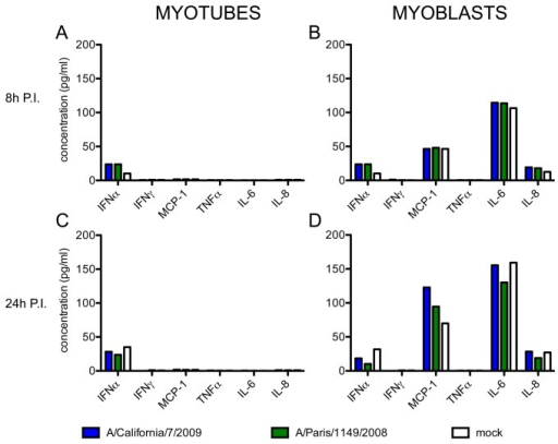 Secretion of 5 cytokines and 1 chemokine by infected muscle cells.The concentrations of IFNα, IFNγ, TNFα, IL-6 and IL‑8 and MCP-1 were simultaneously measured in the culture supernatants of myotubes (left panels) and myoblasts (right panels), at 8h (A, B) and 24h (C, D) after infection with the influenza viruses A/California/7/2009 (blue bars) or A/Paris/1149/2008 (green bars), or in non-infected cells cultured in parallel (white bars). These results are representative of two independent experiments on cells from donor CHQ.