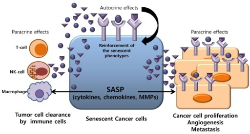 Tumor Cell Senescence in Cancer Treatment
