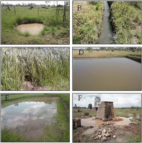 Physical appearance of mosquito larval habitat types identified on Nyabondo plateau in western Kenya. The habitats included artificial ponds (A), open drains (B), swamps (C), active fish ponds (D), abandoned fish ponds (E) and temporal pools (F).