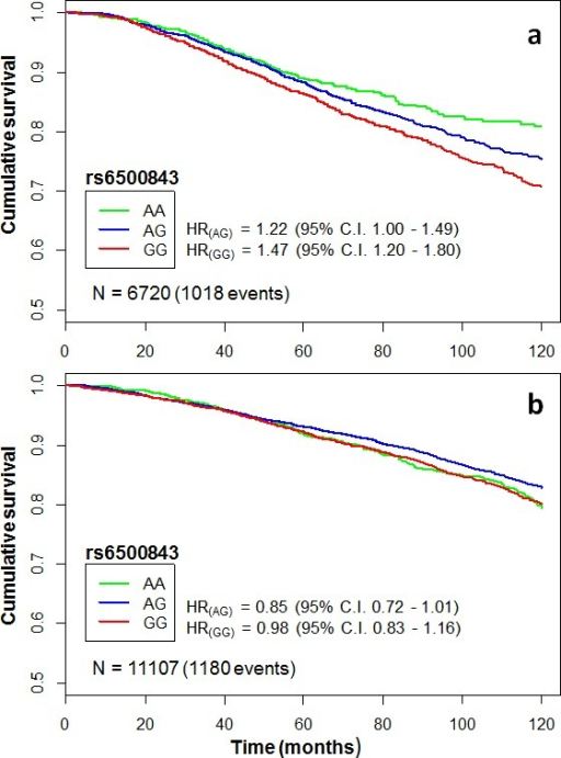 Kaplan-Meier curves illustrating cumulative 10-year overall survival among cases of the pooled iCOGS data set categorized by rs6500843 genotypeThe HRs indicate genotype-specific hazard ratios relative to the reference genotype (AA). Censoring marks have been omitted to make the curves clearer. The data set has been subgrouped according to treatment: a) patients treated with any adjuvant chemotherapy, b) patients who did not receive adjuvant chemotherapy.