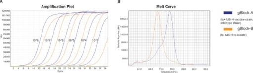 Amplification plot and melting-curves of MS-H2 melt-MAMA.Amplification plot (A) of dilution series of gBlock validation controls showing the sensitivity of the MS-H2 assay. Green line represents negative control. Melting curves (B) show melting temperatures for the temperature sensitive MS-H vaccine strain and a wild-type strain (Tm: 76.8°C; blue line) or non-temperature sensitive MS-H re-isolate (Tm: 70.9°C; orange line).