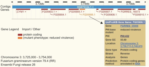 "Ensembl genome browser view for Fusarium graminearum. The website at http://fungi.ensembl.org/Fusarium_graminearum was searched for the gene id FGSG_05906 encoding the secreted lipase gene Fgfgl1. The PHI-base phenotype of the mutant is displayed and color coded in orange as ""reduced virulence."""