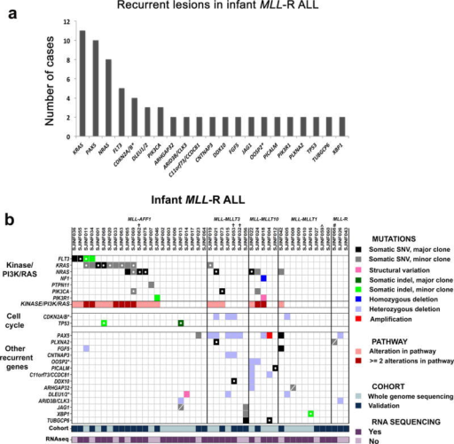 Recurrently mutated genes detected in 47 cases of infant MLL-R ALL. WGS was performed on 22 leukemic samples (discovery cohort) and targeted capture sequencing of the coding exons of 232 genes on an additional 25 infant MLL-R ALL samples (validation cohort). (a) Recurrent mutations were identified in 21 genes/loci in the combined infant MLL-R ALL cohorts. The * indicates that more than two genes were targeted in this locus (see Supplementary Tables 7, 8, 14, 19 and 24). (b) Distribution of mutated genes across the 47 infant MLL-R cases. For mutations in kinases or in genes in the PI3K/RAS pathway, only those known to confer activation of the pathway are shown. * indicates that more than two genes were targeted within the locus in one or more of the cases with only the first gene in the locus listed. † indicates that the sample lacked a matched non-leukemic sample. ∧ indicates that this sample is an identical twin to 060; the matched non-leukemic sample from 060 was used. # indicates that this sample has a novel MLL-USP2 fusion identified through RNA sequencing. A SNV marked with an open circle designates that the mutant allele is expressed as determined by RNA sequencing and a dash indicate that it is not expressed at the level of detection for our analysis.