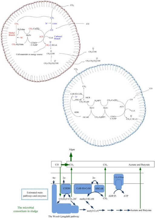 Predicted pathways inside microbial systems for conversion of carbon monoxide to carbon dioxide, methane and acids.