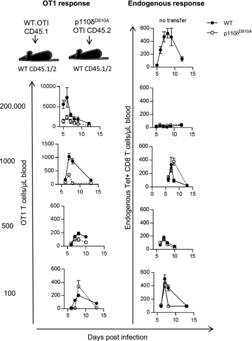 CD8 T cell–intrinsic role for p110δ is dose-dependent. The indicated number of purified WT OT1 T cells (CD45.1+) or p110δD910A OT1 T cells (CD45.2+) were transferred into WT recipient mice (CD45.1+CD45.2+), which were infected 1 d later with Lm-OVA and the number of OT1 T cells and endogenous Tet+CD8+ CD8 T cells in the blood was determined by flow cytometry. The left panel shows number of transferred OT1 T cells recovered from blood samples (filled symbols indicate WT OT1; empty symbols indicate p110δD910A OT1). The right panel shows endogenous Tet+CD8+ T cells of WT mice receiving WT OT1 T cells (filled symbols) or p110δD910A OT1 T cells (empty symbols); n = 4–8/group. Results are representative of two to four independent experiments.