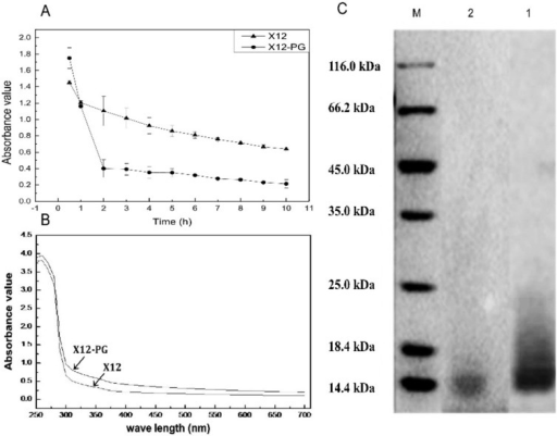 Quantitative and qualitative analysis of X12-PG. (A) The degradation models of X12-PG and X12 when exposed to lysozyme. A450 nm of X12-PG declined faster than that of X12; (B) The UV-visible scanning spectrum of X12-PG and peptidoglycan standard. The standards and samples were scanned between 190 and 700 nm in a UV/VIS spectrophotometer; and (C) The molecular weight (kDa) of X12-PG quantified by SDS-PAGE. The gels were stained with Coomassie Brilliant Blue. The molecular weight was 14 kDa, corresponding to the peptidoglycan standard. Each graph represents the average of more than three replications.