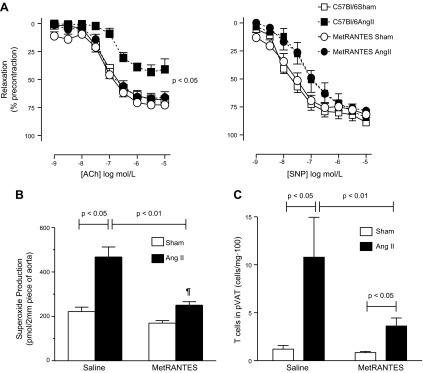 Effects of met-RANTES on vascular function and perivascular T-cell infiltration in Ang II–dependent hypertension. A) Effect of Ang II–induced hypertension on endothelium-dependent vasodilatation to ACh in aortas of saline (saline) and met-RANTES-treated (50 mg/kg i.p.) mice (left; n = 5 for each). Relaxations to sodium nitroprusside as measure of non-endothelium-dependent vasodilatation (right;n = 5 for each). B) Aortic superoxide levels measured by monitoring oxidation of dihydroethidium to 2-hydroxyethidium using HPLC in control and met-RANTES-treated mice infused for 14 d with buffer (sham) or Ang II (n = 5). C) Effects of met-RANTES on mean T-cell (CD45+CD3+) infiltration in isolated pVAT (minus aorta) during Ang II–dependent hypertension (n = 5).