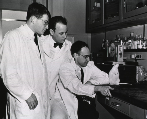 <p>Dr. Gordon Tomkins, of the University of California, and Drs. Donald S. Fredrickson and Daniel Steinberg, of the National Heart Institute, in a laboratory looking at a white rat which appears to be obese. The rat is standing on its hind legs. There are wall cabinets with supplies. Under the cabinets there is a  shelf with clear, labelled bottles. There is a device that appears to be a scale.</p>